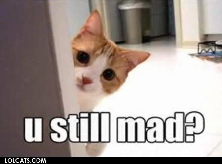 Mad Cat Meme - lolcats u still mad