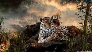 Jaguar Cat Hd Wallpaper