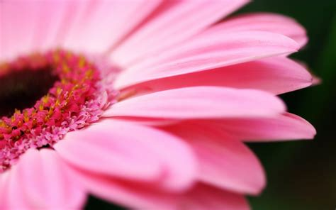 Black And White Wallpapers Pink Flower Wallpaper