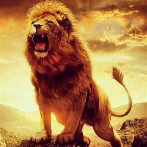 lion poems   Tumblr