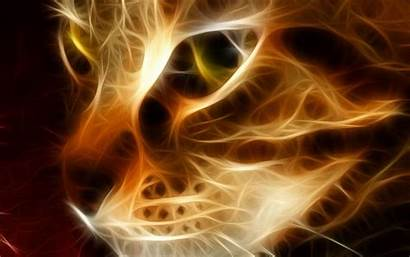 Cool Cat Backgrounds Fire Wallpapers Animals Cats