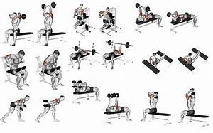 The Perfect Beginner U2019s Bodybuilding Program