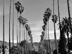 Palme Schwarz Weiß : palmen in los angeles kalifornien schwarz und wei palme ~ Eleganceandgraceweddings.com Haus und Dekorationen