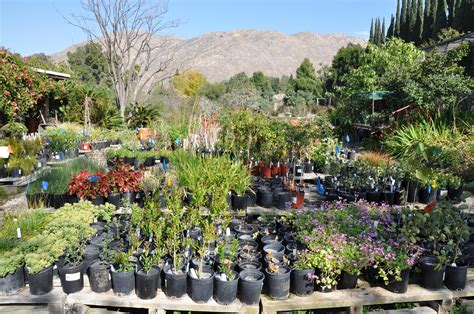 ucr today botanic gardens plant sale