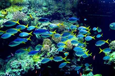 aquarium de monaco 28 images monaco oceanographic institute aquarium panoramio photo of