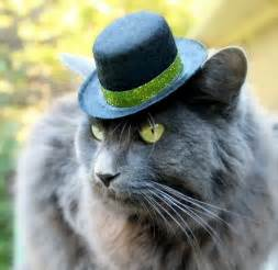cat hats hats for cats take my paycheck shut up and take my