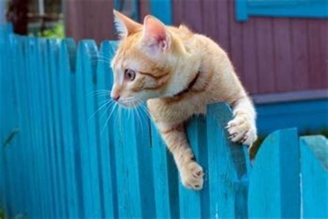 how to keep cats out of yard 1000 images about cat repellent on pinterest gardens