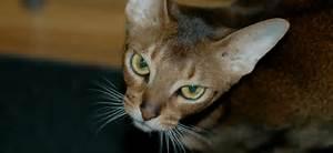 Site De Discussion : chat aime ~ Medecine-chirurgie-esthetiques.com Avis de Voitures
