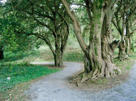 kerry gems ballyseedy wood walk   tranquil  easy