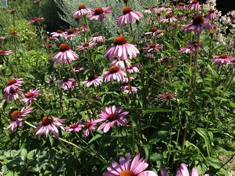 Botanischer Garten Uni Karlsruhe öffnungszeiten by Pflanze Des Monats August 2013
