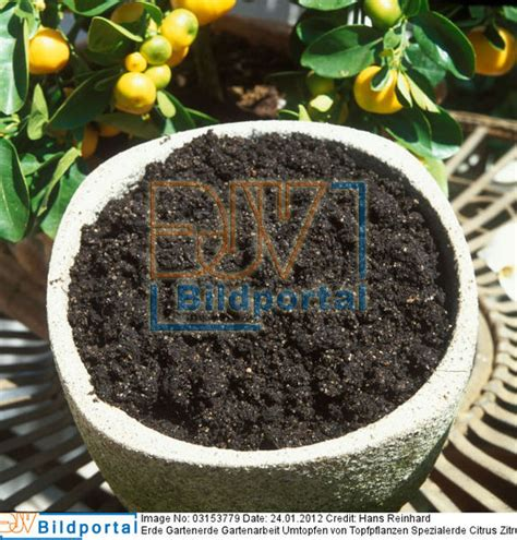 erde für zitruspflanzen details zu 0003153779 erde gartenerde gartenarbeit umtopfen topfpflanzen spezialerde
