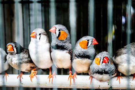 Top 10 Tiny, Cute Colourful Birds and Their Sounds   HubPages