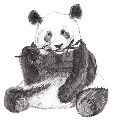 draw  panda yedraw drawing lessons  kids