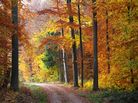 In the Autumn Forest in 2020 | Autumn landscape, Autumn forest, Nature pictures