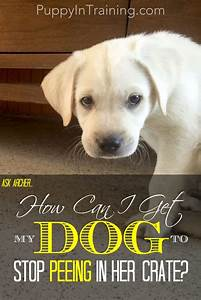 How can i get my dog to stop peeing in her crate for How to train your dog to pee