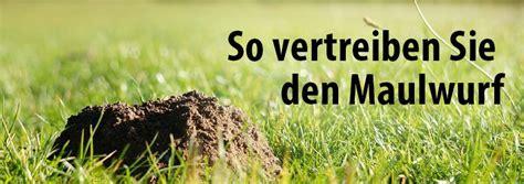 was hilft gegen maulwürfe was tun gegen marder im garten gro ameisen vernichten im