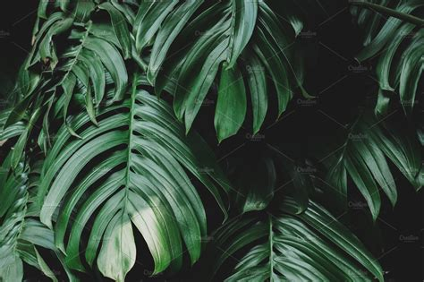 lush green tropical jungle leaves nature