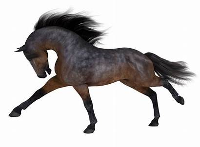 Horse Daz3d Daz Ladyfyre Graphics Cg