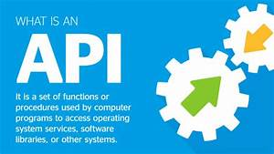 Apis For Dummies  Five Easy Ways To Know More About Them