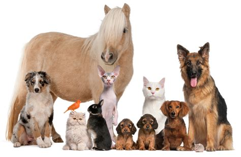 animals horse cat dog pet horses pets odours petz divine pawsitively plenty animal grooming create cellfood air dander bacteria indoor