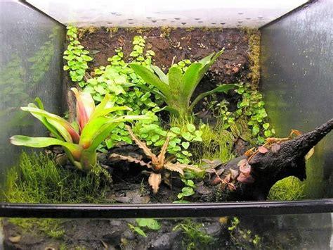 tropical terrarium plants  ideas   crested