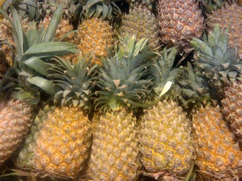 Pineapple HD Desktop Wallpapers