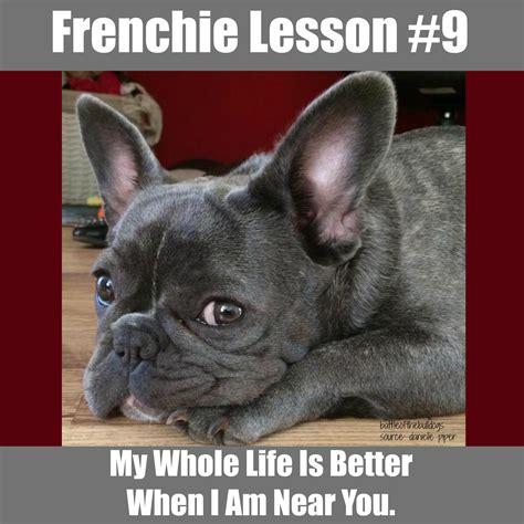 French Bulldog Meme - frenchie lesson 11 frenchie memes pinterest