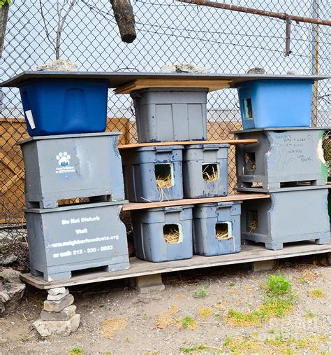 Feral Cat Shelter Photograph By Photo Researchers