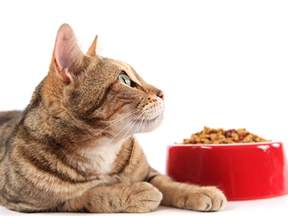 what is the best cat food how to select best foods for your cats obey my cat