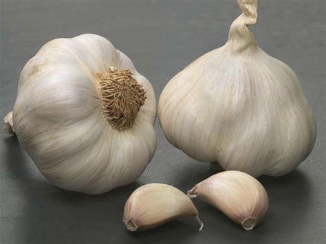 health benefits  garlic health diet news