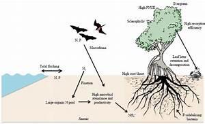 Mangrove Diagram Gallery