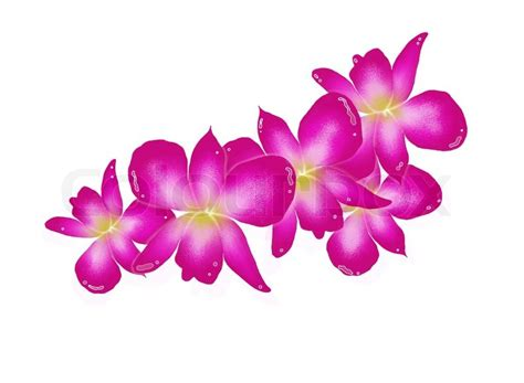 Hand Drawing Of Pink Orchids Isolated On White Background