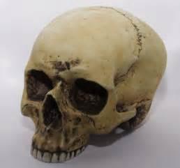 Human Skull Bone Drawing