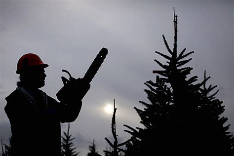 can you trim a christmas tree where you can cut your own tree in the kalamazoo area
