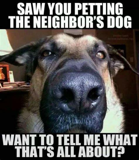 laugh alert  top dog memes   total favs