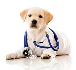 animal clinics pet doctor me veterinarian pet hospital