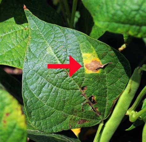 Signs And Symptoms Of Plant Disease Is It Fungal, Viral