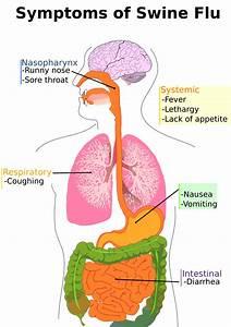 Swine Flu Symptoms Diagram  Medical  Medical Problems