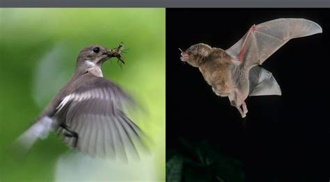 canmove centre  animal movement research bat