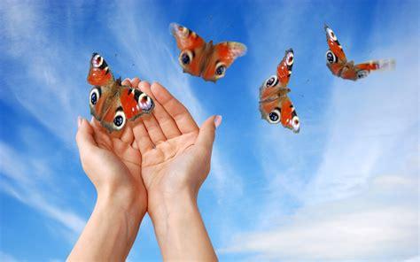 si e free butterfly wallpaper 2560x1600 wallpoper