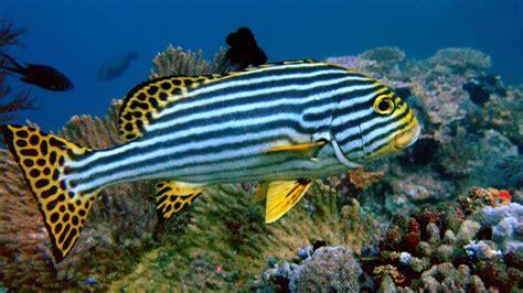 amazing  blog beautiful fishes