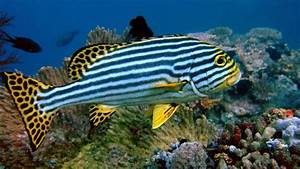 My Amazing Things Blog: Beautiful fishes photos