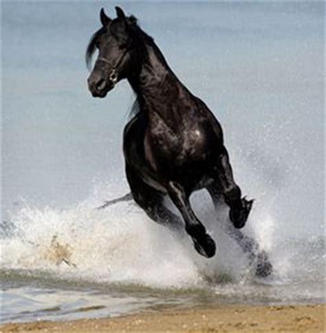 fries paardenrassen nederlandsepaardenblogjouwwebnl
