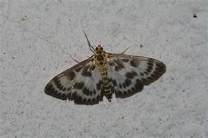 Black moths in my bathroom 28 images small moths in my for Tiny moths in bathroom