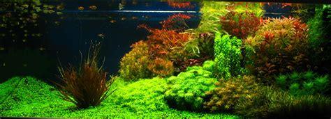 Dutch Aquascapes  Aquascaping World Forum