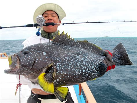 grouper yellowfin mayhem maldives shab