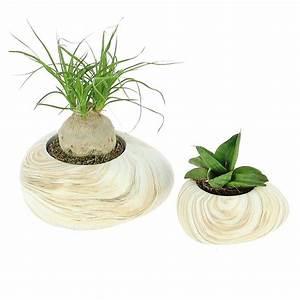 Mini Plante Artificielle : livraison duo de succulentes mini plante verte foliflora ~ Teatrodelosmanantiales.com Idées de Décoration
