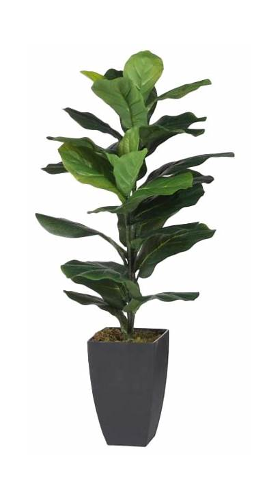 Pot Plant Leaf Fiddle Fig Artificial Decorist