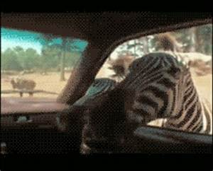 Zebra Hello GIF - Find & Share on GIPHY