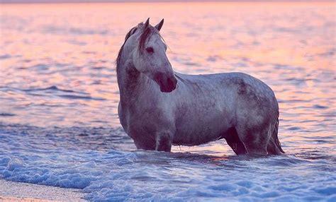 polen pferde kaufen kostenlos herunterladen bilder und